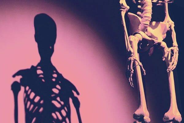 Spirit Yoga Aufbau-Ausbildung Yoga Anatomie